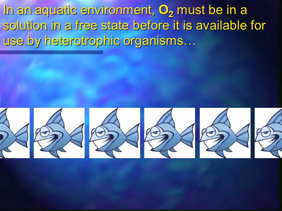 Terrestrial = 200 mL O 2 / 1 L air Aquatic = 10 mL O 2 / 1 L water O 2 distribution in water also depends on: partial pressure of O 2 in the air above the water !