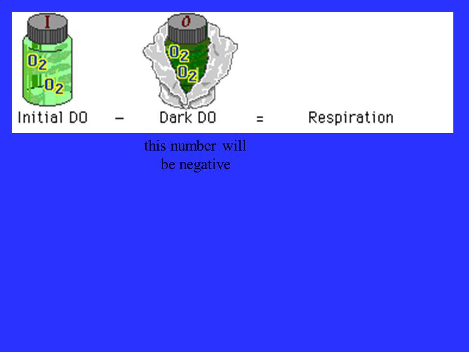 net productivity + respiration = gross productivity (light - initial) + (initial - dark) = gross productivity (light) + (- dark) = gross productivity