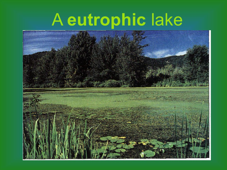 A eutrophic lake is shallow with high nutrient content. The phytoplankton are very productive and the waters are often murky.The phytoplankton are ver
