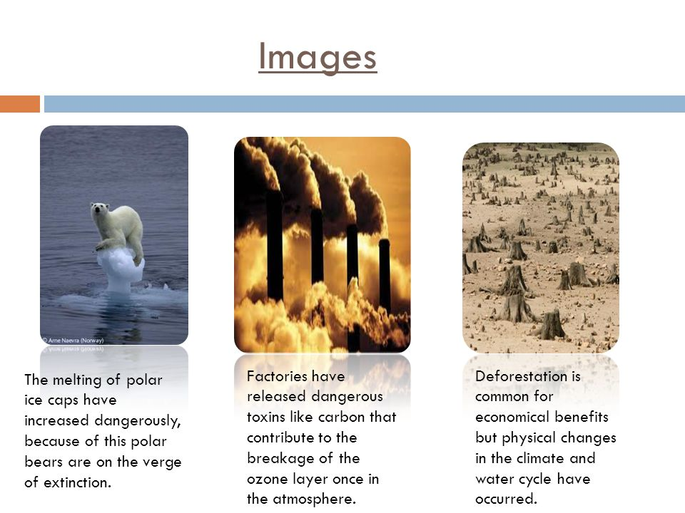 Images The melting of polar ice caps have increased dangerously, because of this polar bears are on the verge of extinction.