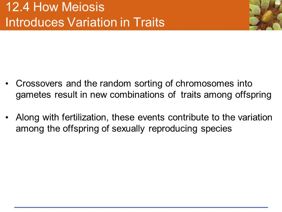 12.4 How Meiosis Introduces Variation in Traits Crossovers and the random sorting of chromosomes into gametes result in new combinations of traits amo