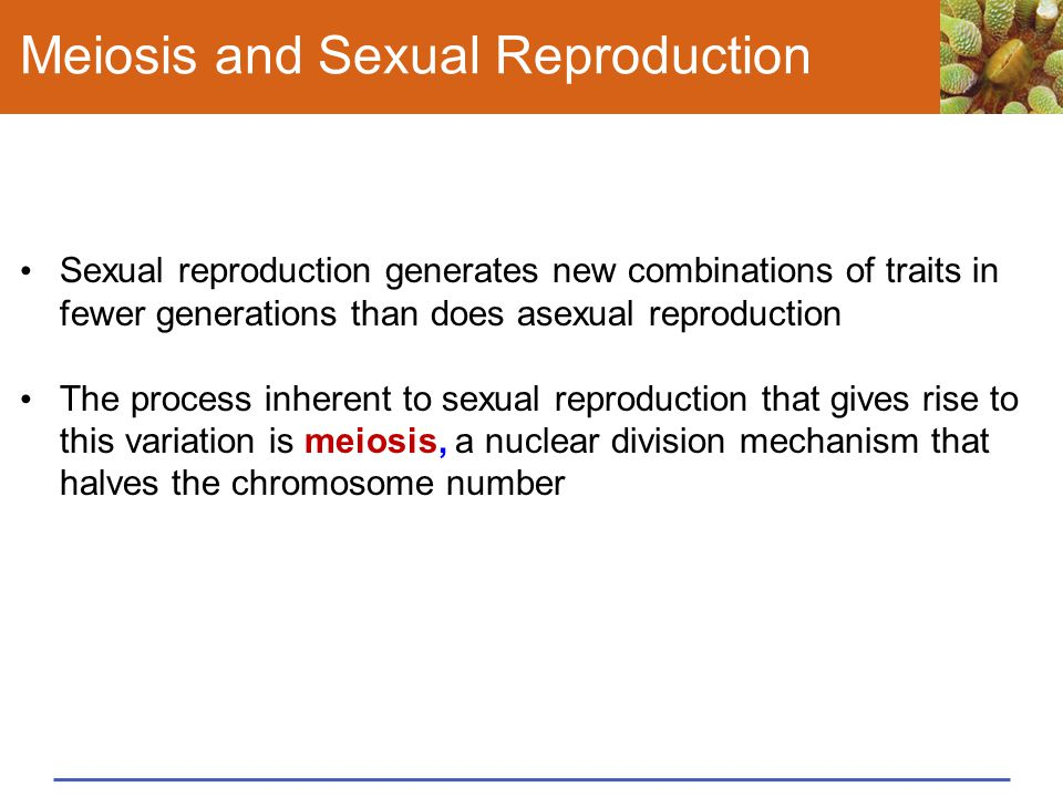 Meiosis and Sexual Reproduction Sexual reproduction generates new combinations of traits in fewer generations than does asexual reproduction The proce