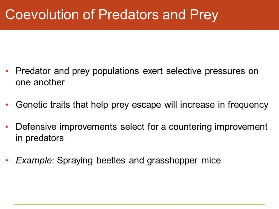 Coevolution of Predators and Prey Predator and prey populations exert selective pressures on one another Genetic traits that help prey escape will inc