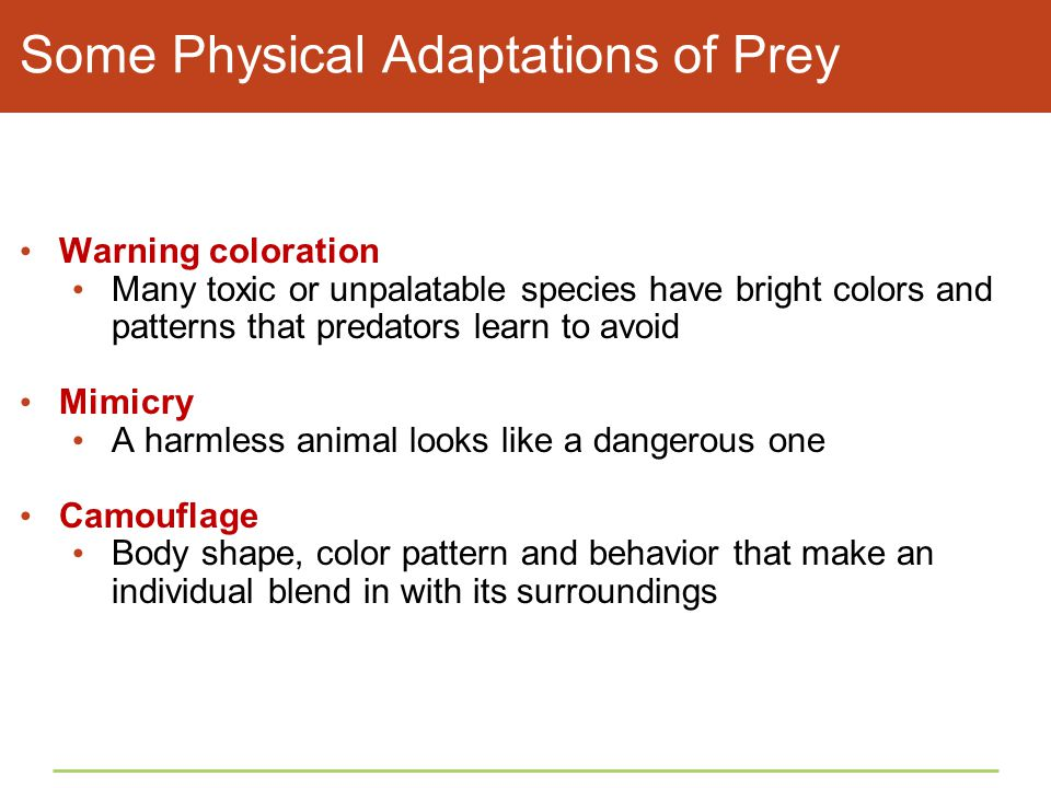 Some Physical Adaptations of Prey Warning coloration Many toxic or unpalatable species have bright colors and patterns that predators learn to avoid M