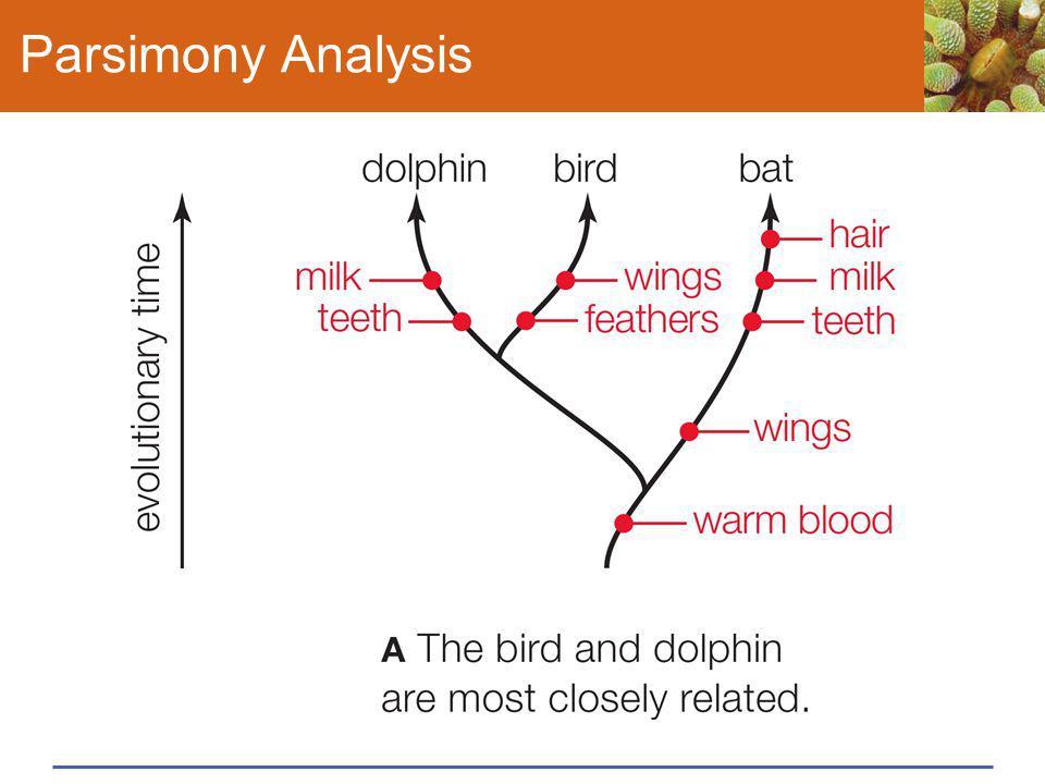 Parsimony Analysis