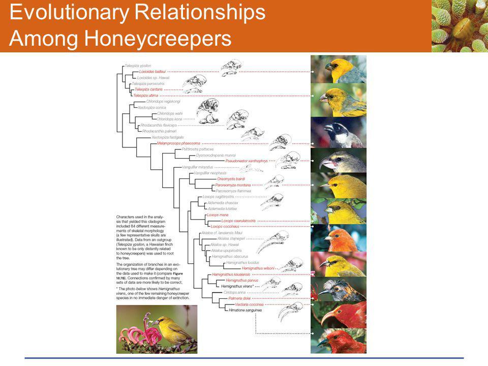 Evolutionary Relationships Among Honeycreepers