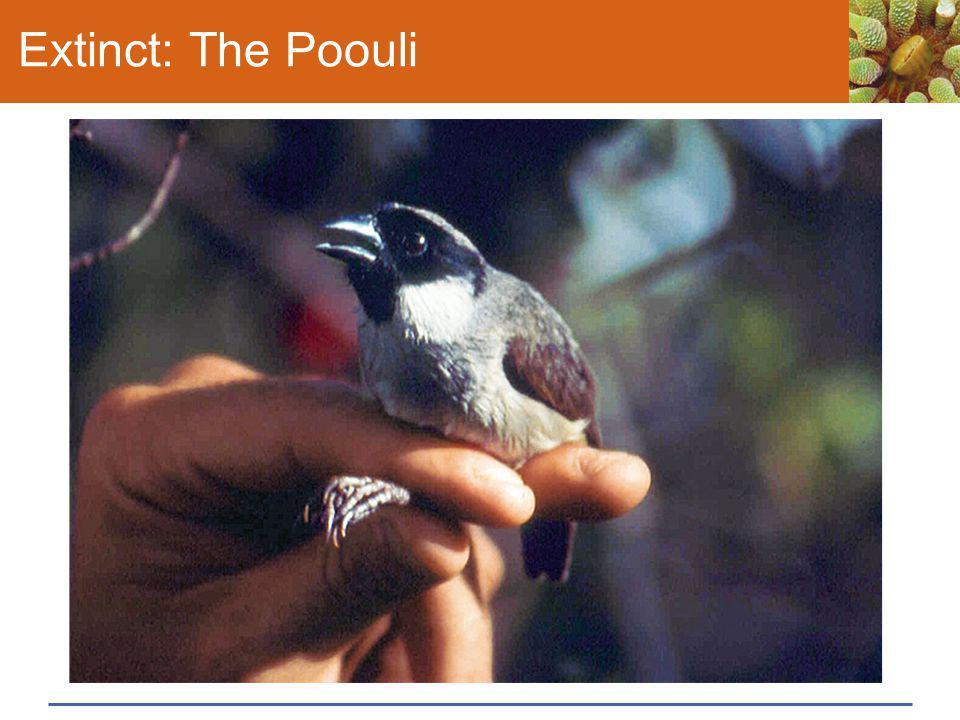 Extinct: The Poouli