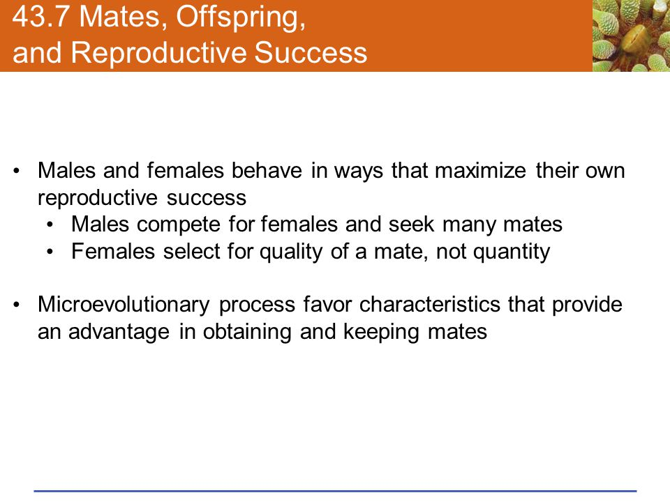 43.7 Mates, Offspring, and Reproductive Success Males and females behave in ways that maximize their own reproductive success Males compete for female