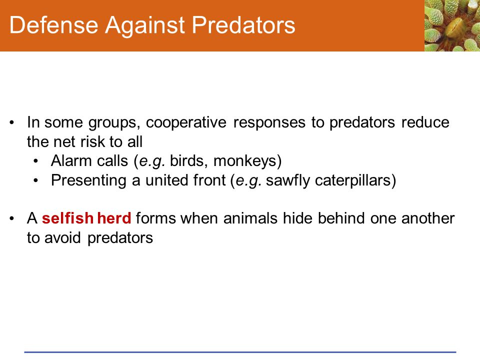 Defense Against Predators In some groups, cooperative responses to predators reduce the net risk to all Alarm calls (e.g. birds, monkeys) Presenting a