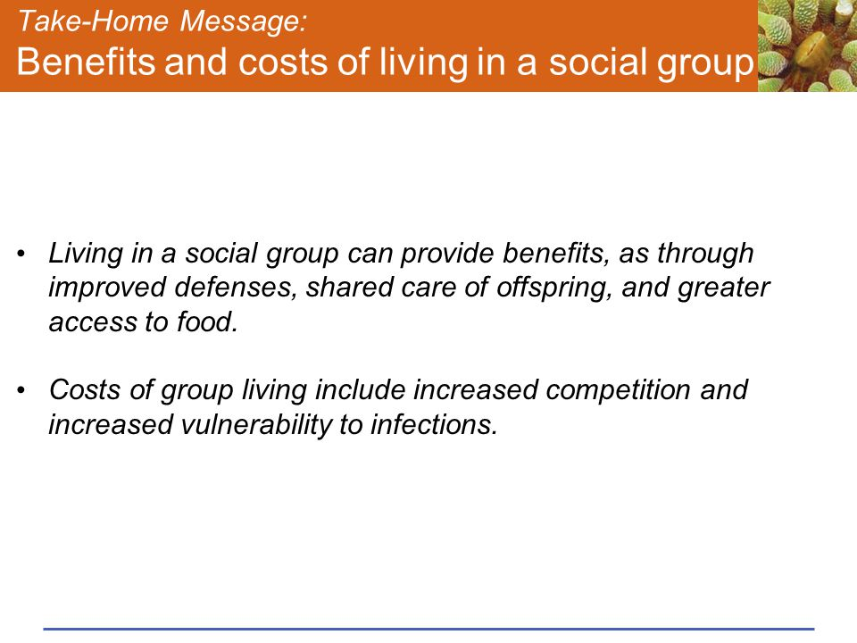 Take-Home Message: Benefits and costs of living in a social group Living in a social group can provide benefits, as through improved defenses, shared