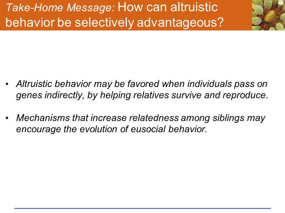 Take-Home Message: How can altruistic behavior be selectively advantageous? Altruistic behavior may be favored when individuals pass on genes indirect