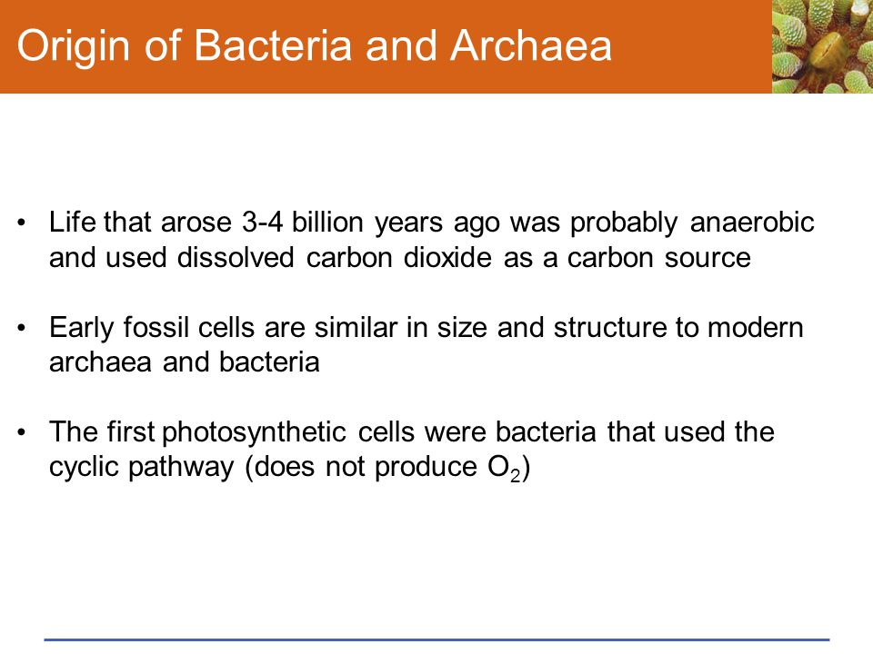 Origin of Bacteria and Archaea Life that arose 3-4 billion years ago was probably anaerobic and used dissolved carbon dioxide as a carbon source Early