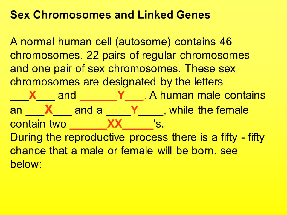 Sex Chromosomes and Linked Genes A normal human cell (autosome) contains 46 chromosomes. 22 pairs of regular chromosomes and one pair of sex chromosom