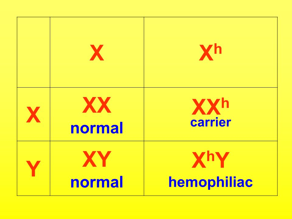XXhXh X XX normal XX h carrier Y XY normal X h Y hemophiliac
