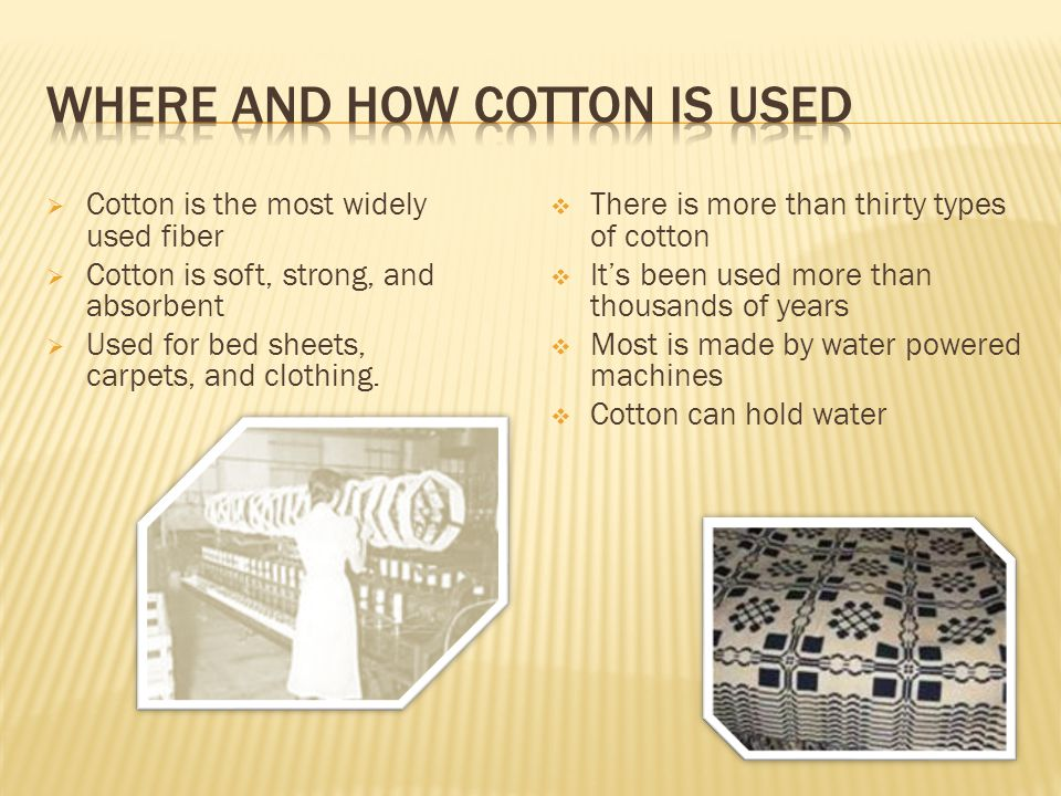  Cotton is the most widely used fiber  Cotton is soft, strong, and absorbent  Used for bed sheets, carpets, and clothing.
