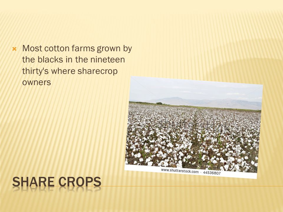  Most cotton farms grown by the blacks in the nineteen thirty s where sharecrop owners
