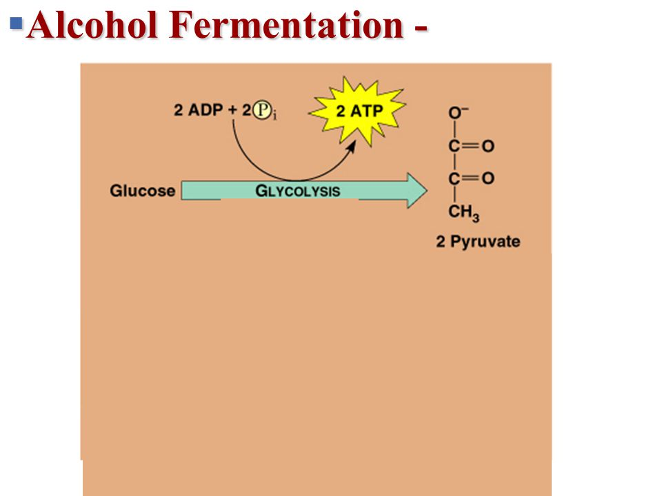  Alcohol Fermentation - + 2 H + 2 NADH2 NAD + 2 ATP 2 ADP + 2 P 2 Pyruvate 2 2 Lactate Lactic acid fermentation Glucose Glycolysis