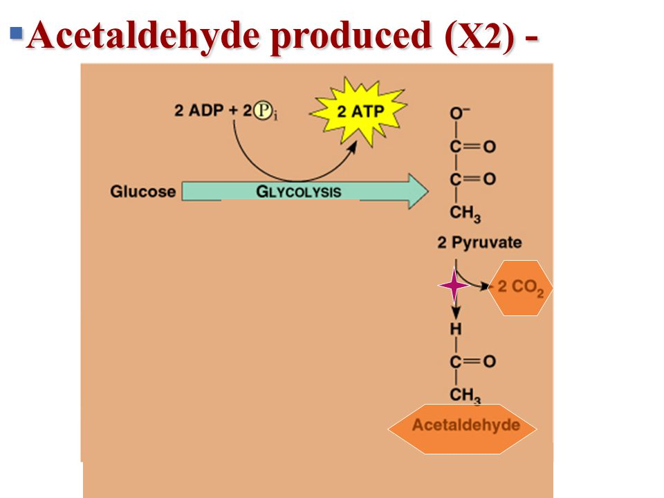 + 2 H + 2 NADH2 NAD + 2 ATP 2 ADP + 2 P 2 Pyruvate 2 2 Lactate Lactic acid fermentation Glucose Glycolysis  Acetaldehyde produced ( X2) -