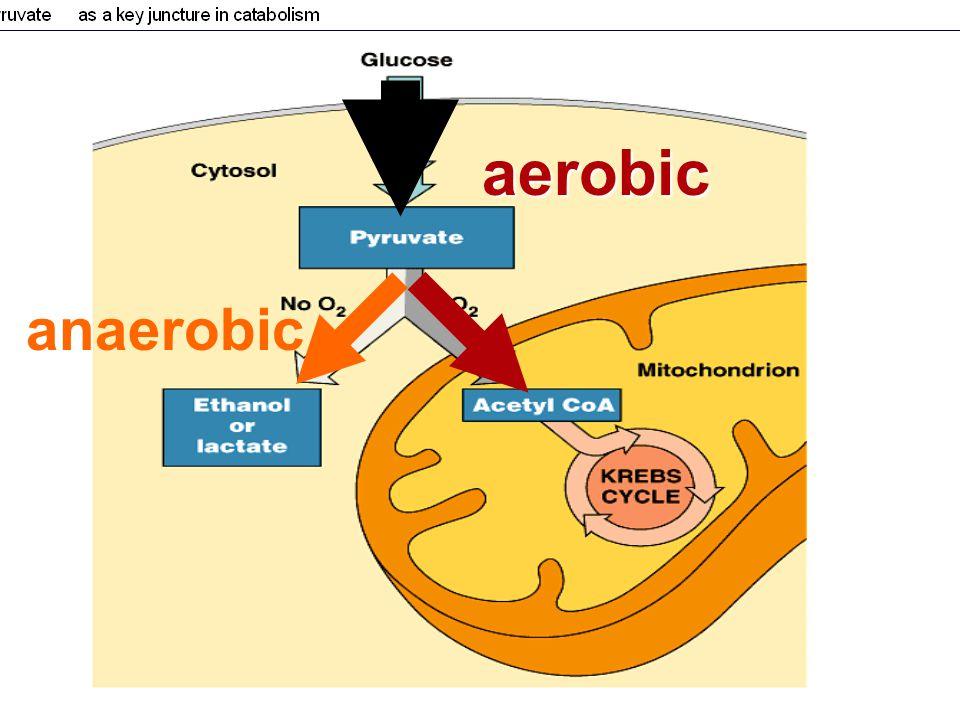 aerobic anaerobic