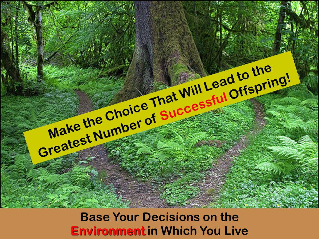 Base Your Decisions on the Environment Environment in Which You Live Make the Choice That Will Lead to the Greatest Number of Successful Offspring!