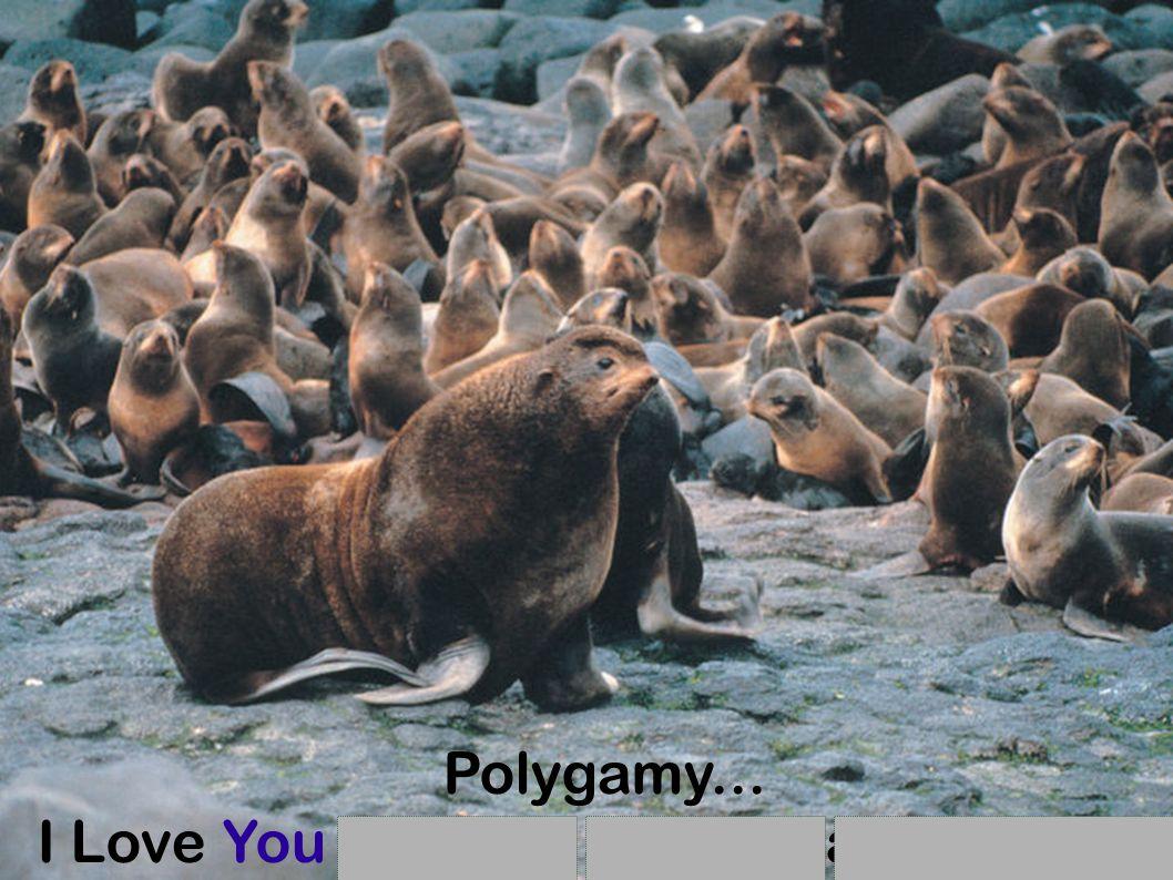 Polygamy... I Love You and You and You and You and