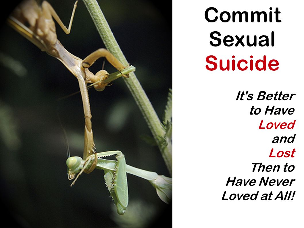 Commit Sexual Suicide It's Better to Have Loved and Lost Then to Have Never Loved at All!