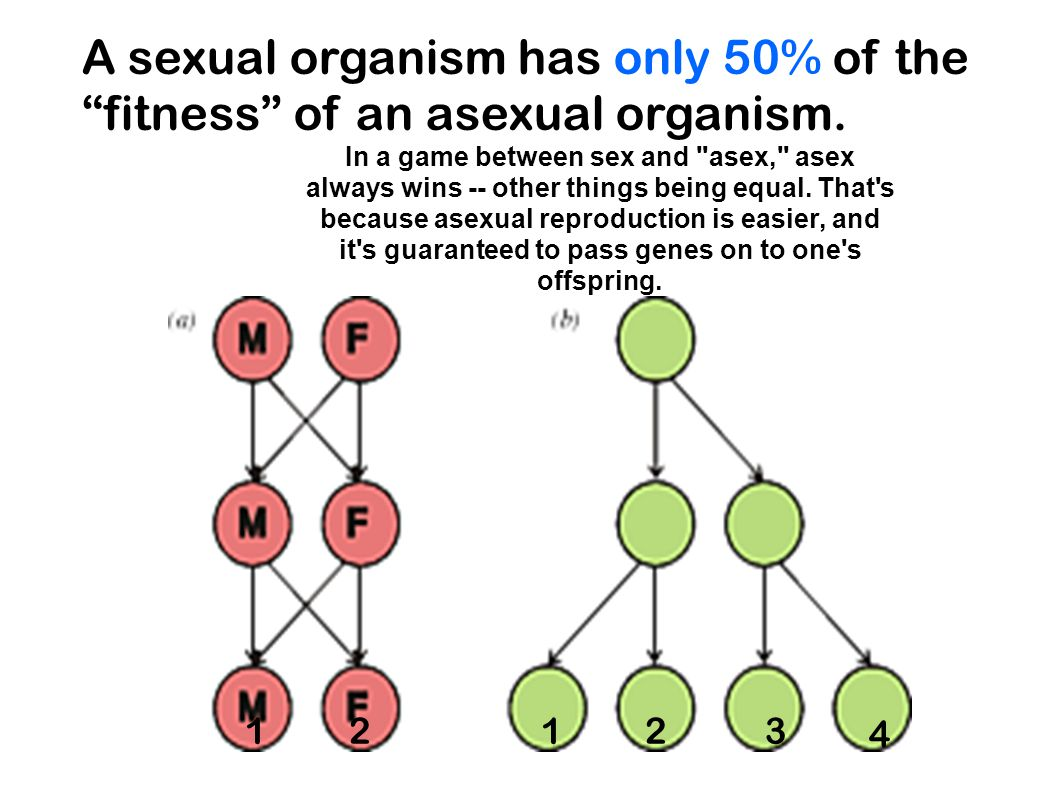 "A sexual organism has only 50% of the ""fitness"" of an asexual organism. In a game between sex and"