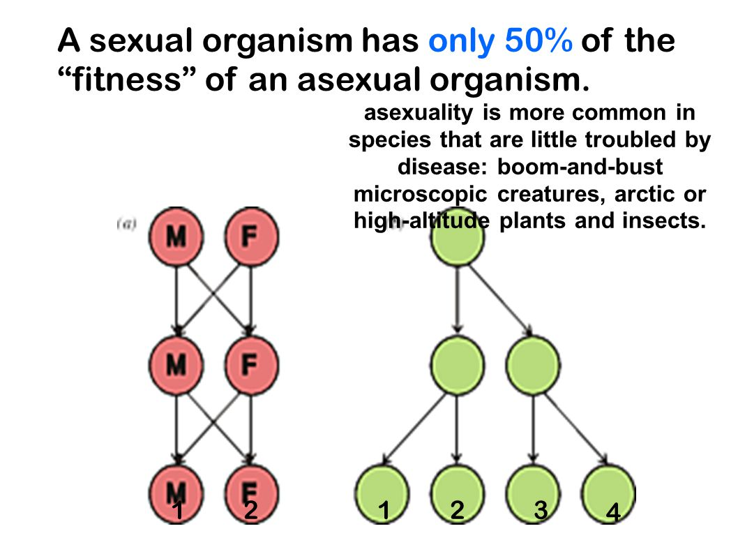 "A sexual organism has only 50% of the ""fitness"" of an asexual organism. asexuality is more common in species that are little troubled by disease: boom"
