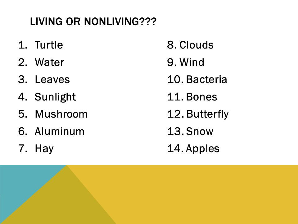 1.Turtle8. Clouds 2.Water9. Wind 3.Leaves10. Bacteria 4.Sunlight11. Bones 5.Mushroom12. Butterfly 6.Aluminum13. Snow 7.Hay14. Apples LIVING OR NONLIVI