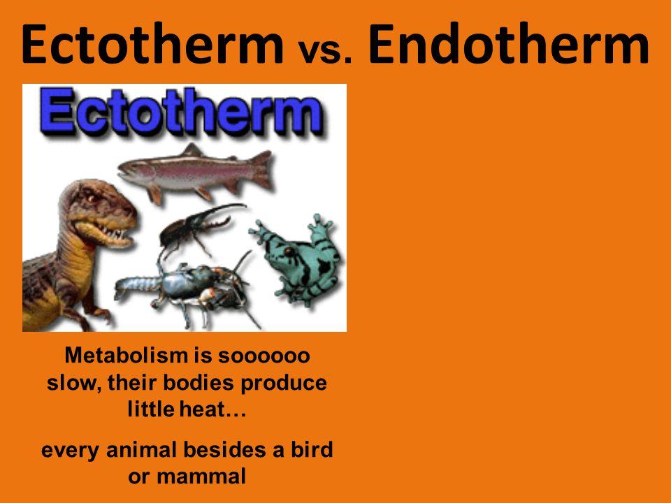 Ectotherm vs.