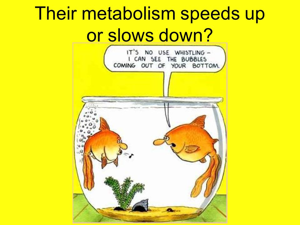 Their metabolism speeds up or slows down
