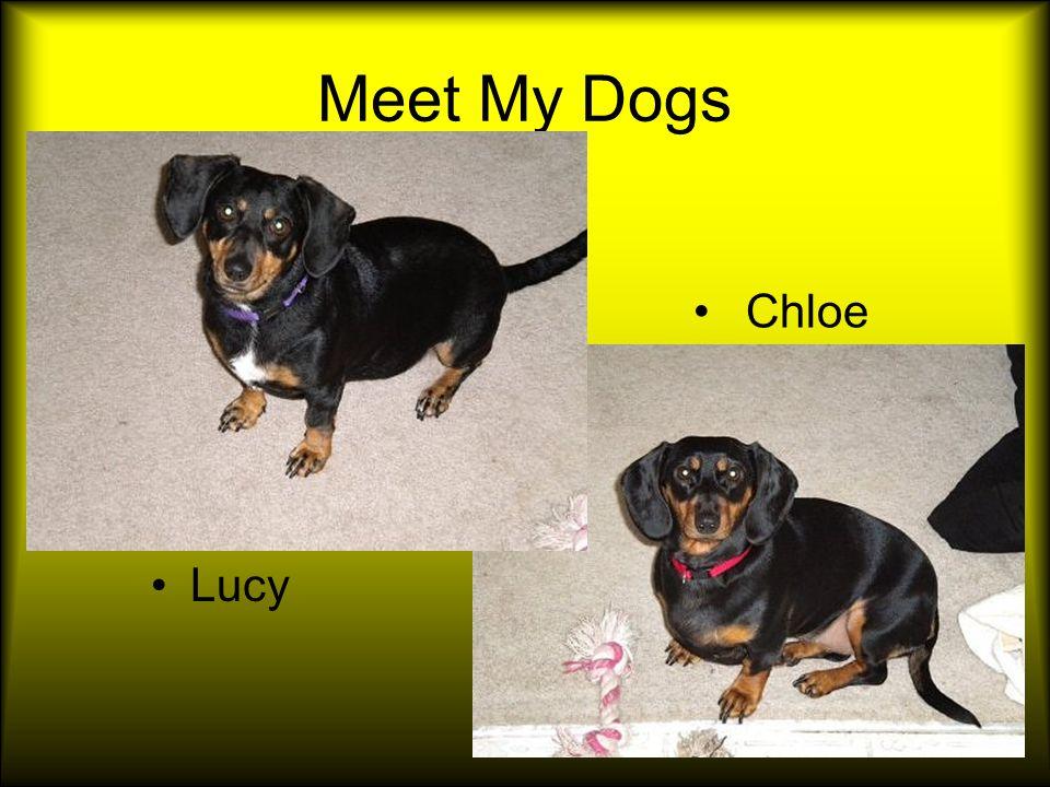 Meet My Dogs Lucy Chloe