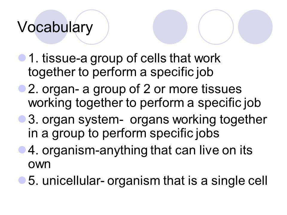 Vocabulary continued 6.multicellar- organism that is made of many cells 7.