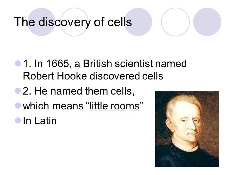 "The discovery of cells 1. In 1665, a British scientist named Robert Hooke discovered cells 2. He named them cells, which means ""little rooms"" In Latin"