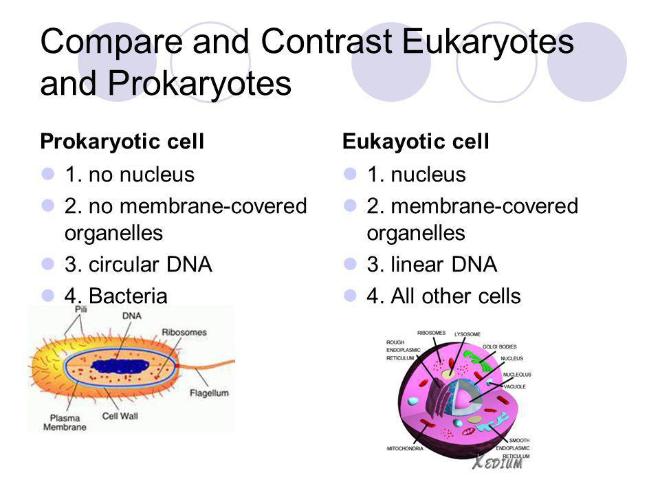 Compare and Contrast Eukaryotes and Prokaryotes Prokaryotic cell 1. no nucleus 2. no membrane-covered organelles 3. circular DNA 4. Bacteria Eukayotic