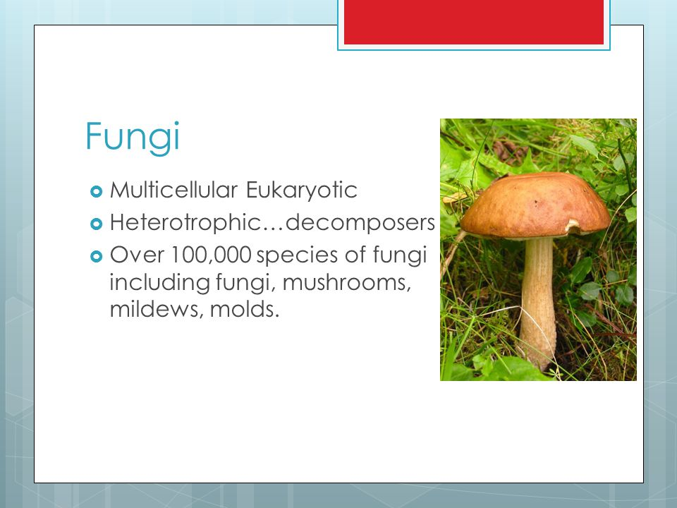 Plantae  Multicellular eukaryotic  Autotrophic (can make their own food…Photosythesis)  Examples include mosses, ferns, conifers, and flowering plants.