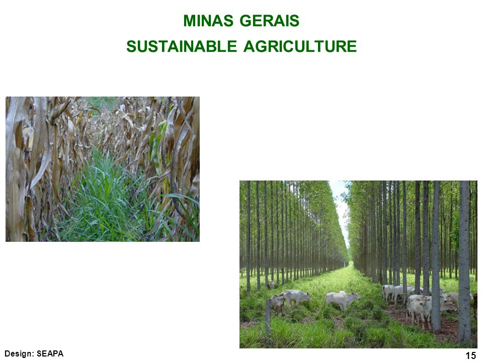15 MINAS GERAIS SUSTAINABLE AGRICULTURE 15 Design: SEAPA