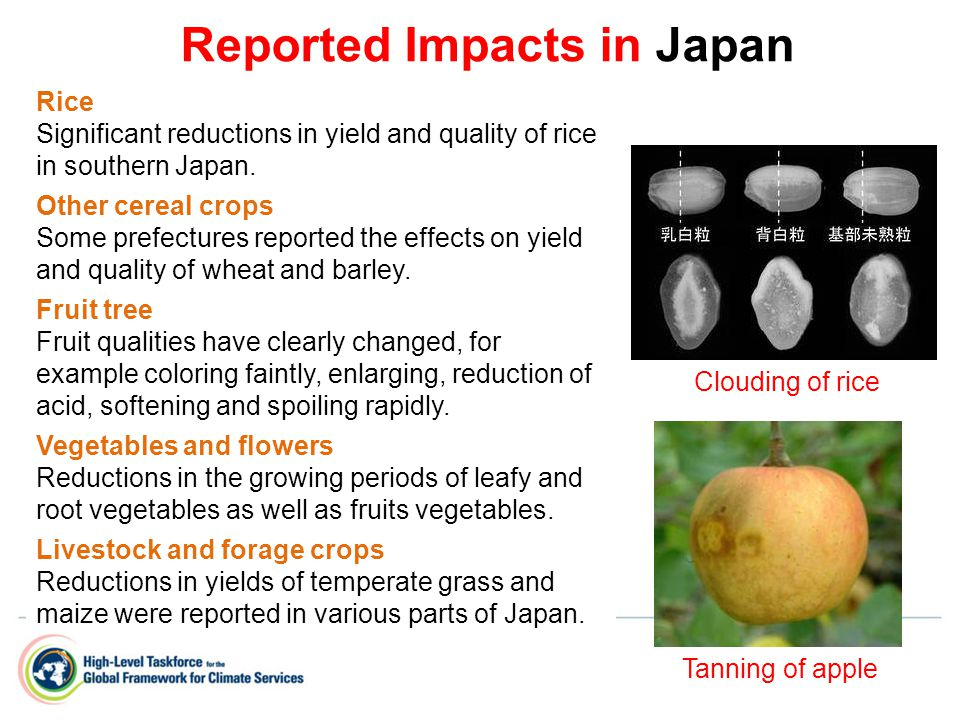 Rice Significant reductions in yield and quality of rice in southern Japan.
