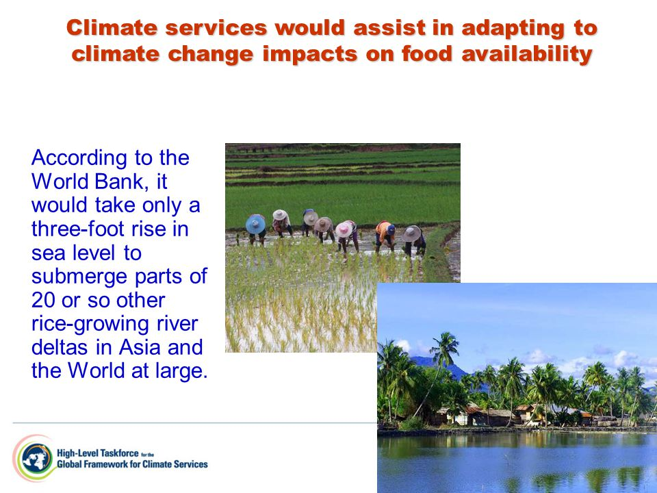 According to the World Bank, it would take only a three-foot rise in sea level to submerge parts of 20 or so other rice-growing river deltas in Asia and the World at large.