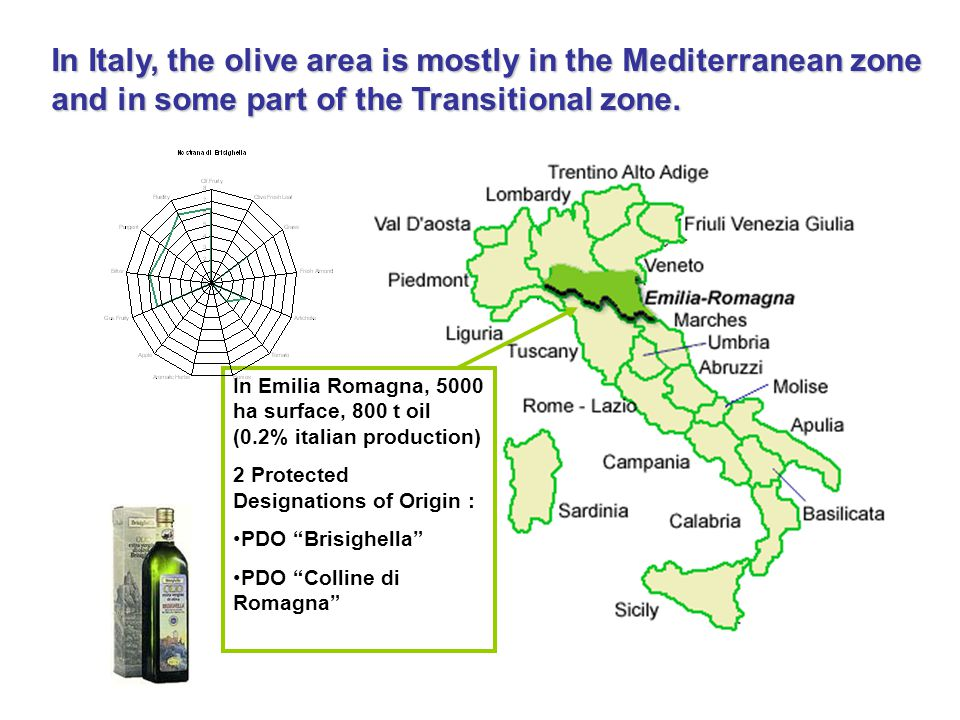 In Italy, the olive area is mostly in the Mediterranean zone and in some part of the Transitional zone.
