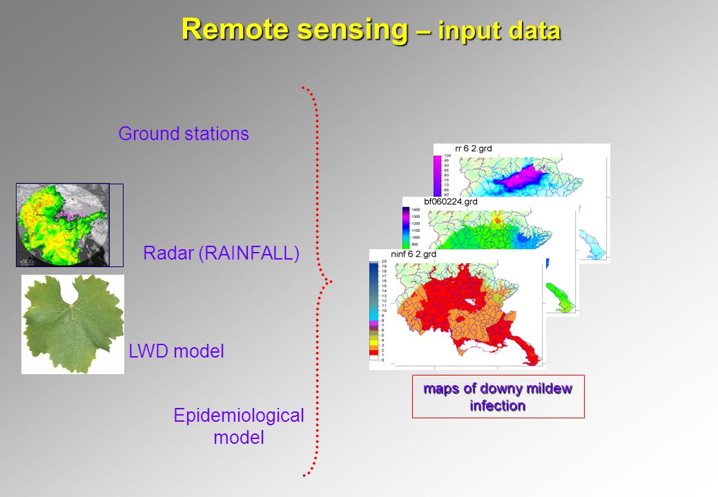 Remote sensing – input data maps of downy mildew infection Radar (RAINFALL) Epidemiological model Ground stations LWD model