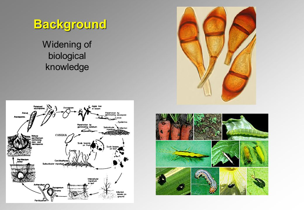 Background Widening of biological knowledge