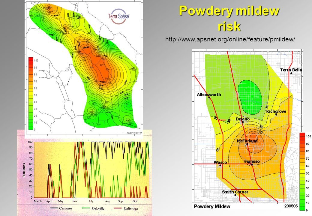 Powdery mildew risk http://www.apsnet.org/online/feature/pmildew/