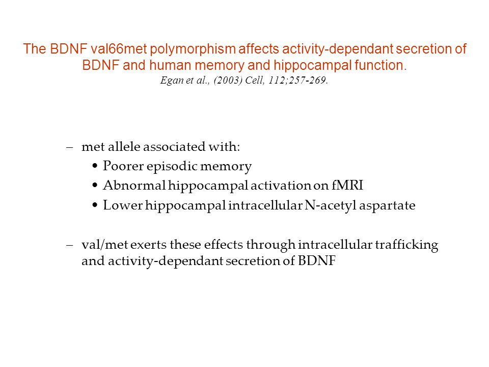 The BDNF val66met polymorphism affects activity-dependant secretion of BDNF and human memory and hippocampal function. Egan et al., (2003) Cell, 112;2