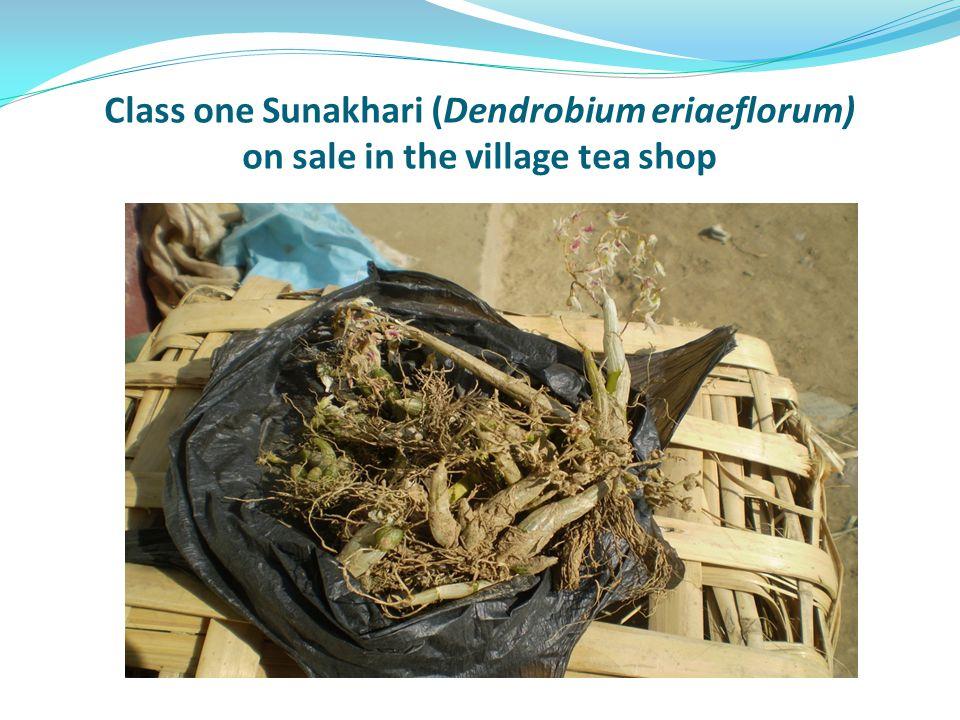 Class one Sunakhari (Dendrobium eriaeflorum) on sale in the village tea shop