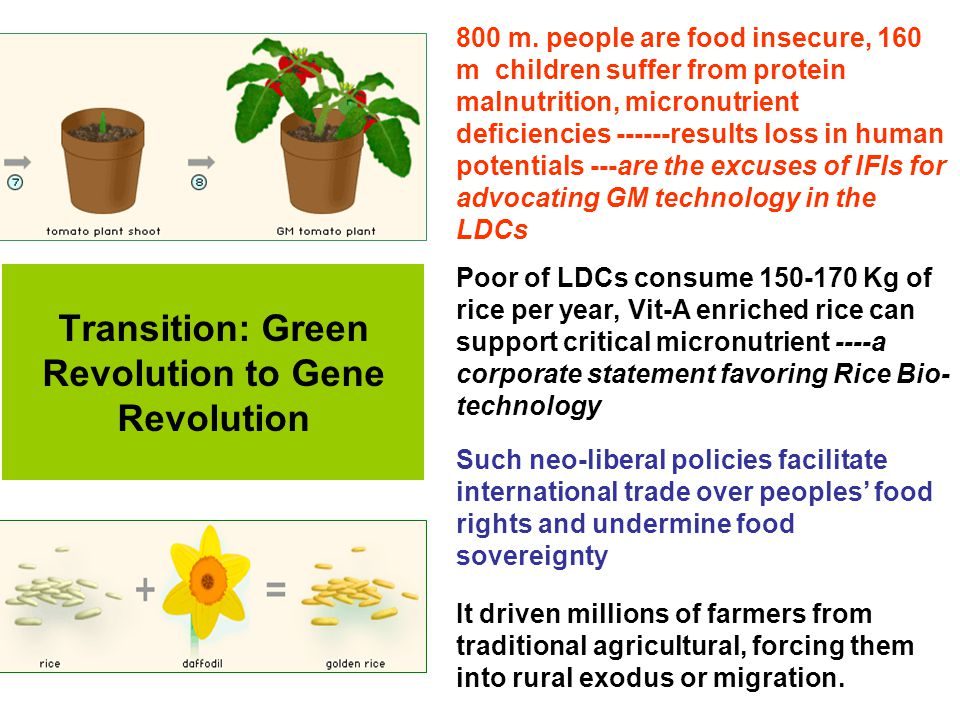 Transition: Green Revolution to Gene Revolution 800 m. people are food insecure, 160 m children suffer from protein malnutrition, micronutrient defici