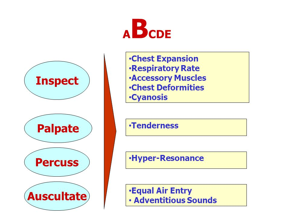 A B CDE Inspect Palpate Percuss Auscultate Chest Expansion Respiratory Rate Accessory Muscles Chest Deformities Cyanosis Tenderness Hyper-Resonance Eq