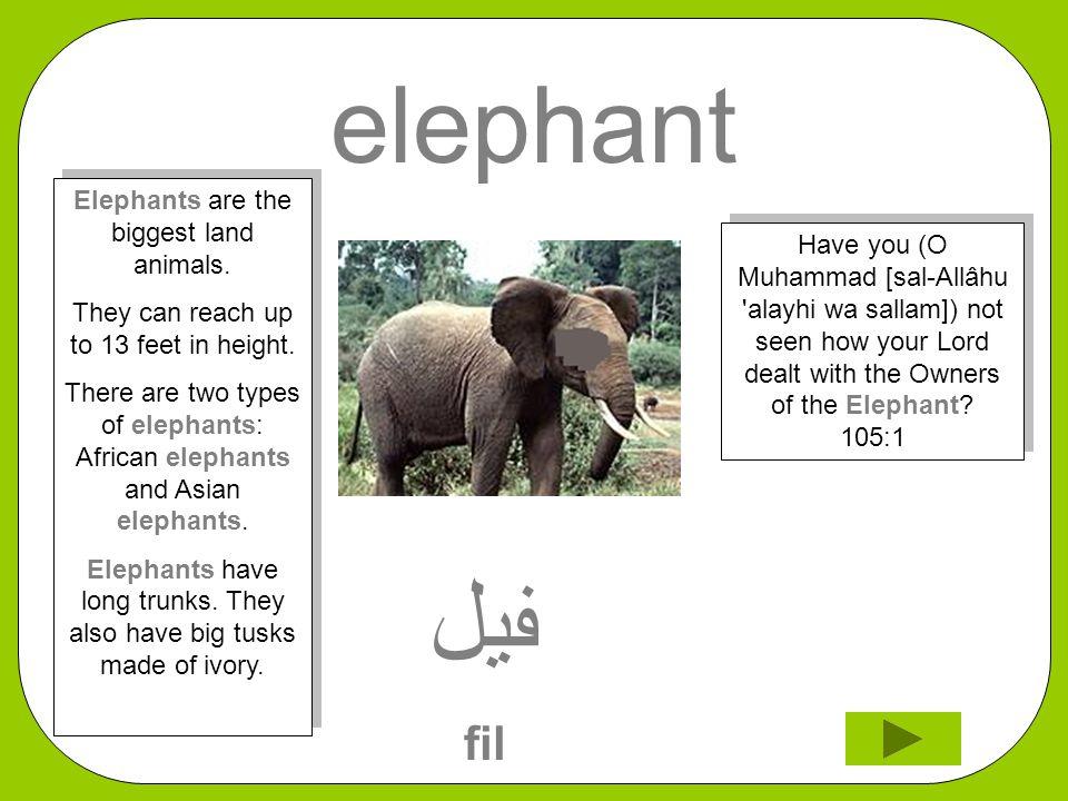 elephant ﻔﻴﻞ fil Have you (O Muhammad [sal-Allâhu 'alayhi wa sallam]) not seen how your Lord dealt with the Owners of the Elephant? 105:1 Elephants ar