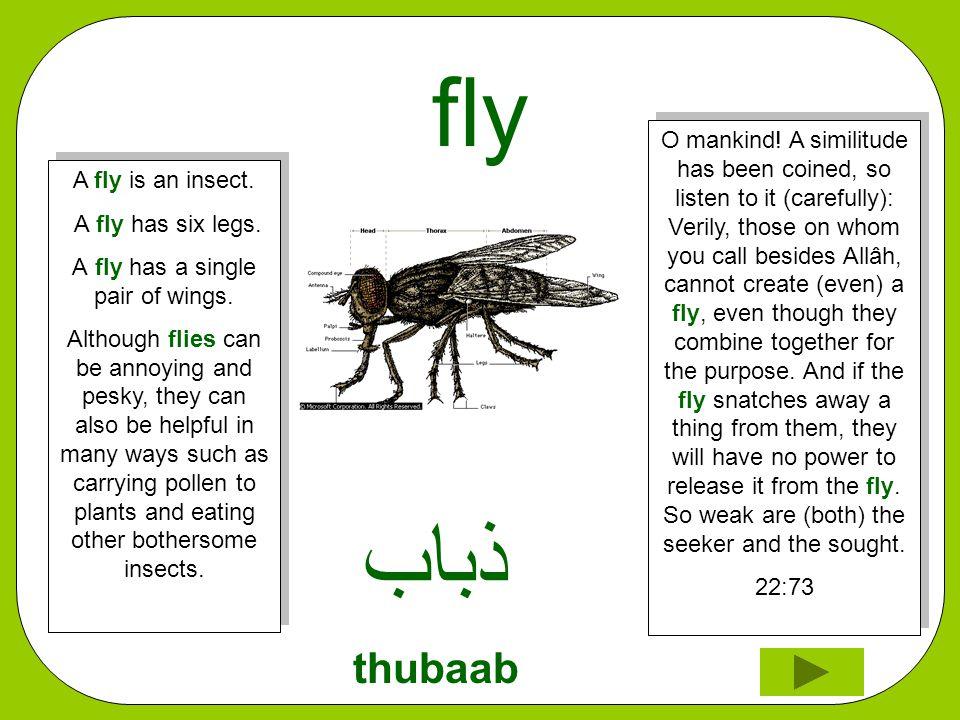 fly ﺬﺑﺎﺏ thubaab O mankind.