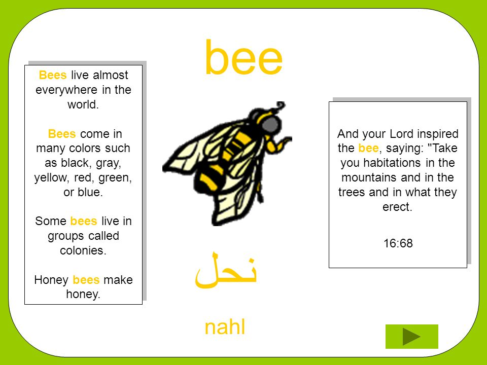 bee ﻨﺤﻞ nahl And your Lord inspired the bee, saying: